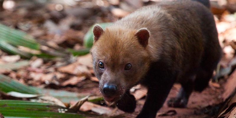mundo-perdeu-60-dos-animais-selvagens-em-40-anos-alerta-estudo-800-600